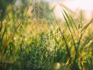 A photo by Aaron Burden. unsplash.com/photos/379FlotHWkE